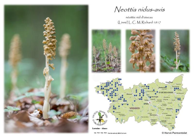 Cartographie des Vosges - Page 2 28_nid10