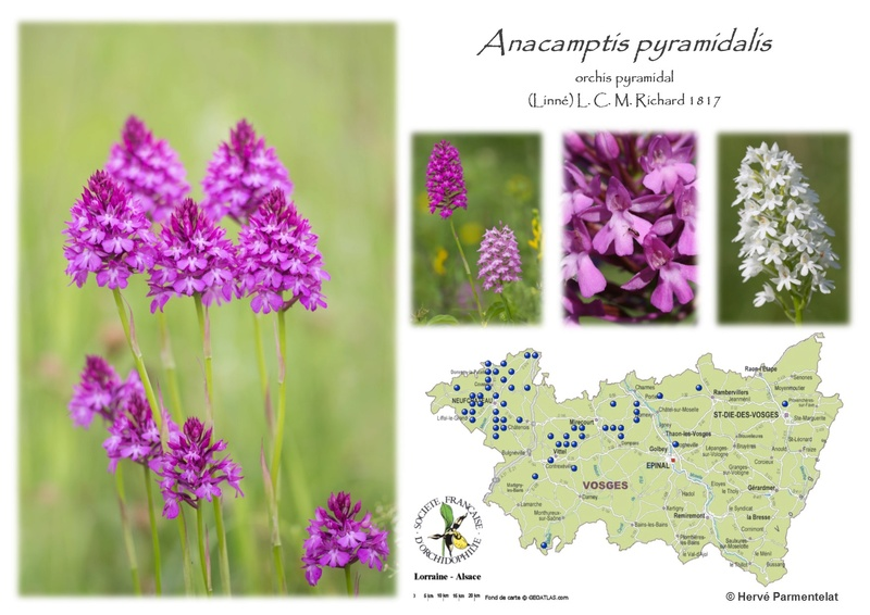 Cartographie des Vosges 2_pyra10
