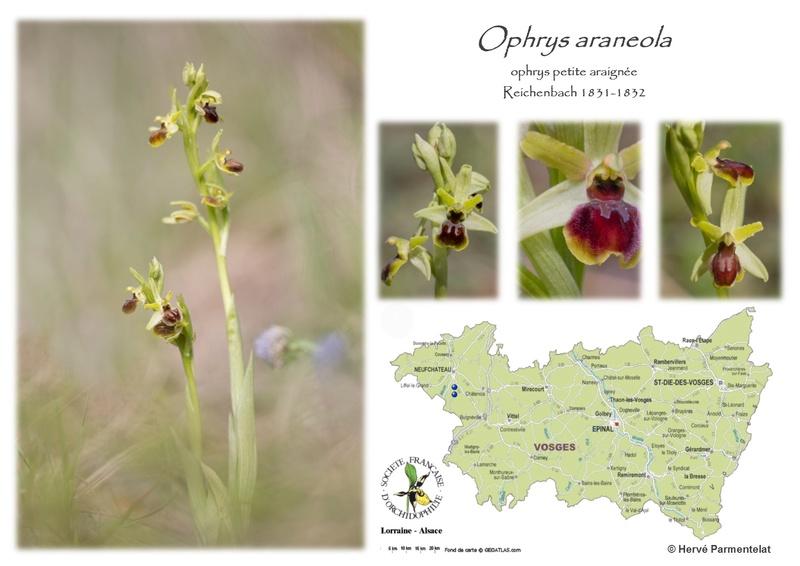 Cartographie des Vosges - Page 2 30_ara10