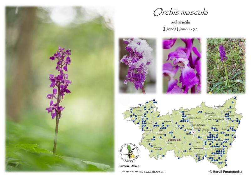 Cartographie des Vosges - Page 2 35_mas10