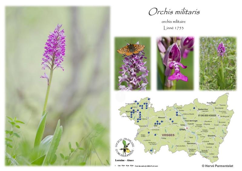 Cartographie des Vosges - Page 2 36_mil10