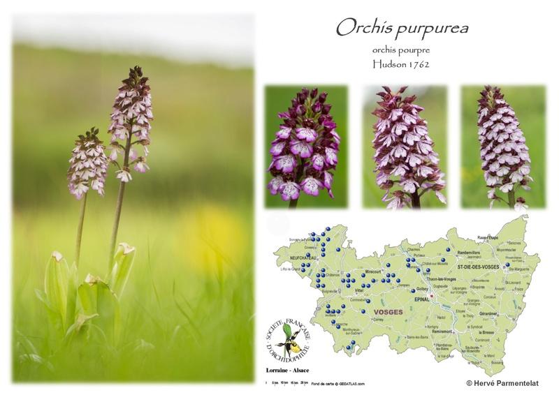 Cartographie des Vosges - Page 2 37_pur10
