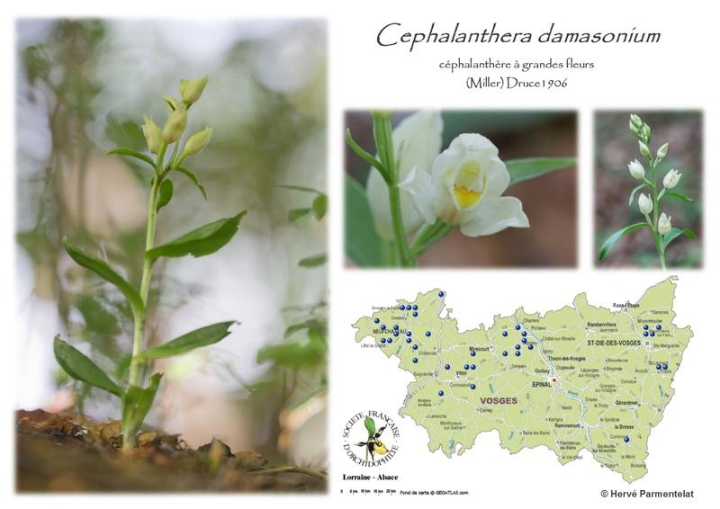 Cartographie des Vosges 3_dama10