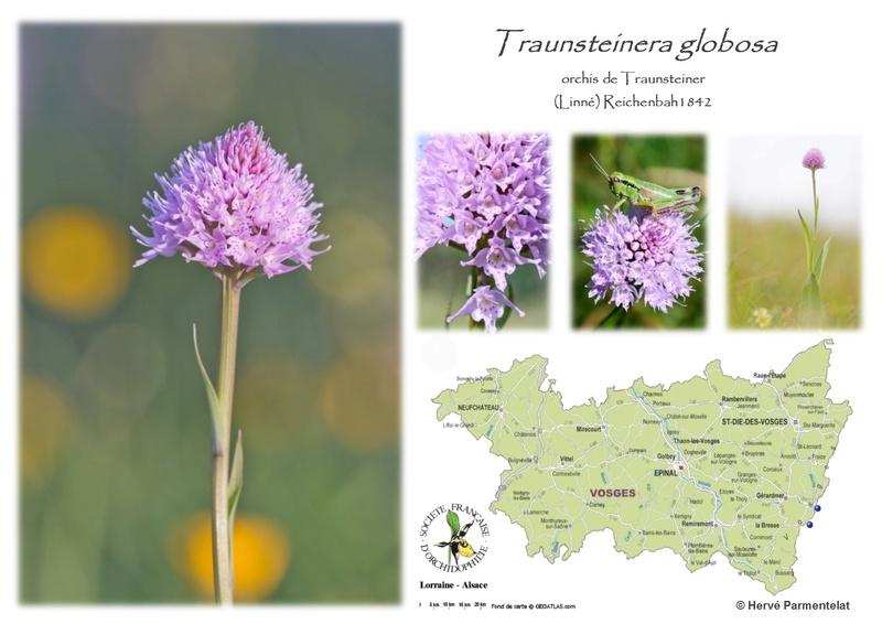 Cartographie des Vosges - Page 2 42_glo10