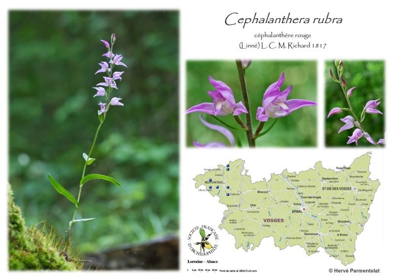 Cartographie des Vosges 5_rubr10