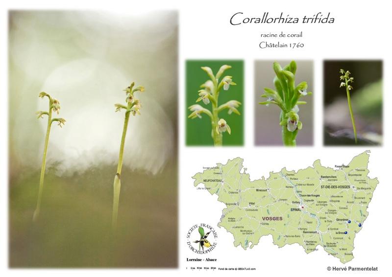 Cartographie des Vosges 6_trif10
