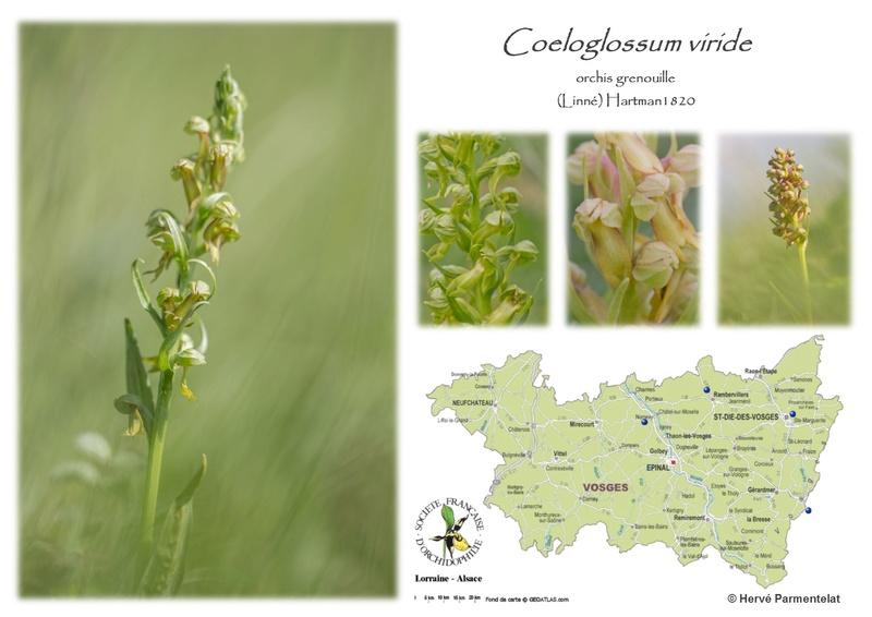 Cartographie des Vosges 7_viri10