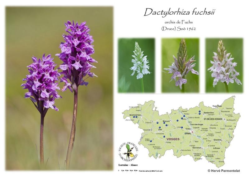 Cartographie des Vosges 8_fuch10