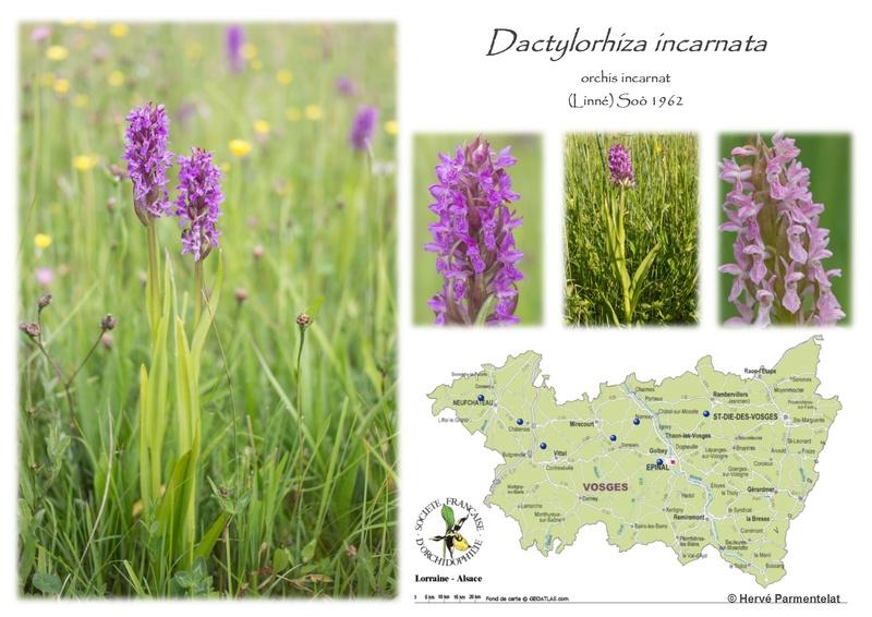 Cartographie des Vosges 9_inca10