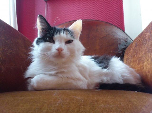 Photos des chats sauvés, avant/après 13428510