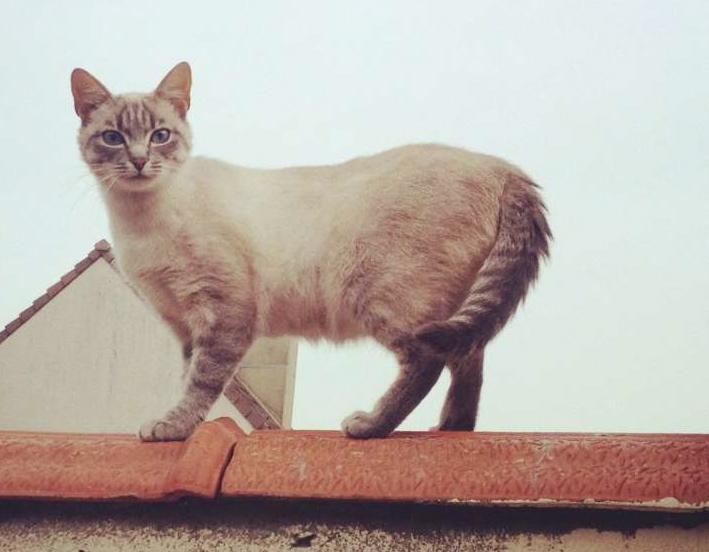 Photos des chats sauvés, avant/après Cassy110