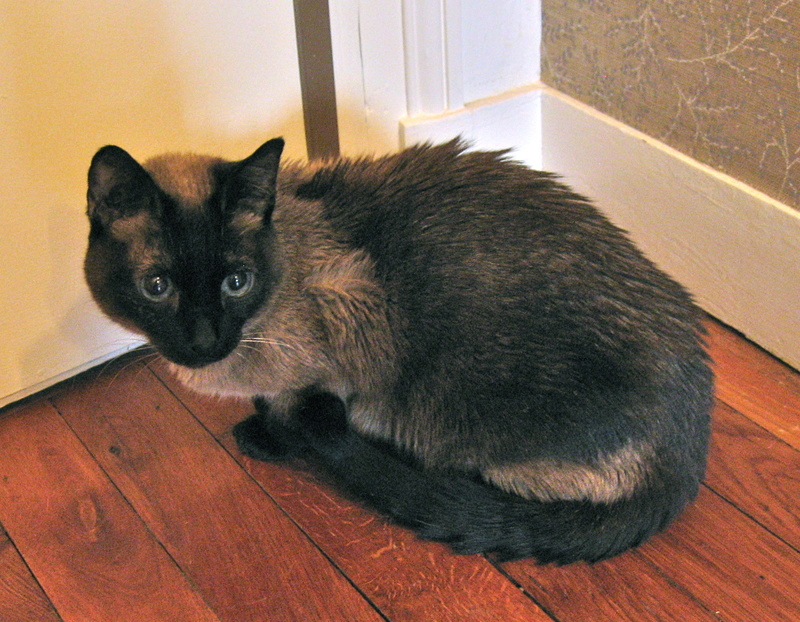 Photos des chats sauvés, avant/après Img_0211