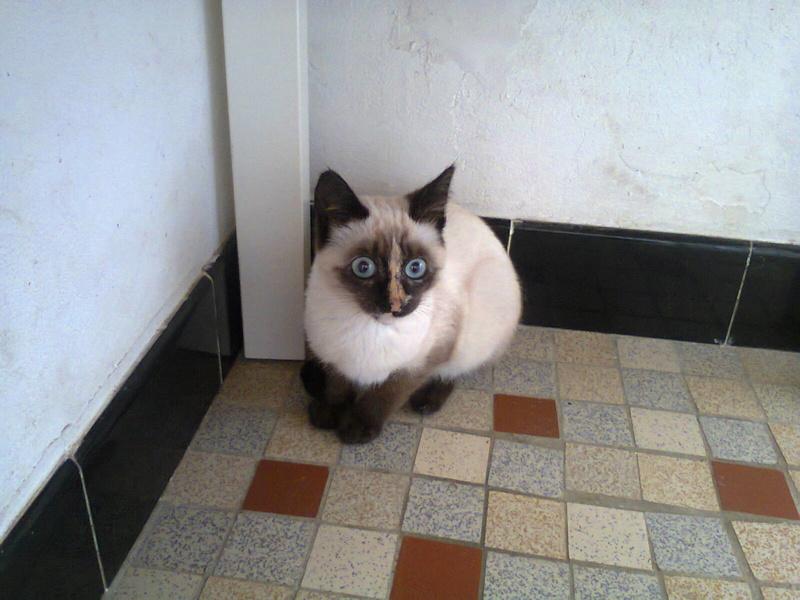 Nos chats à l'adoption Photo010