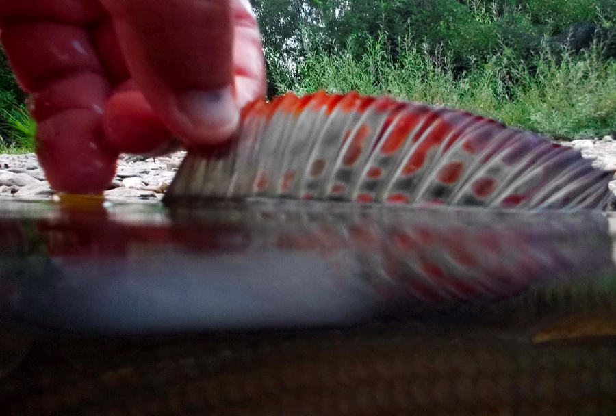 Fotografije ulova, ribe, oprema i dr. - Page 14 Dscn0019