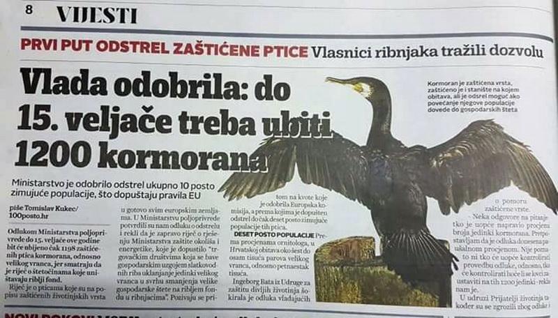 Kormorani (i dr. ptice ribolovci) ! - Page 13 Fb_img79