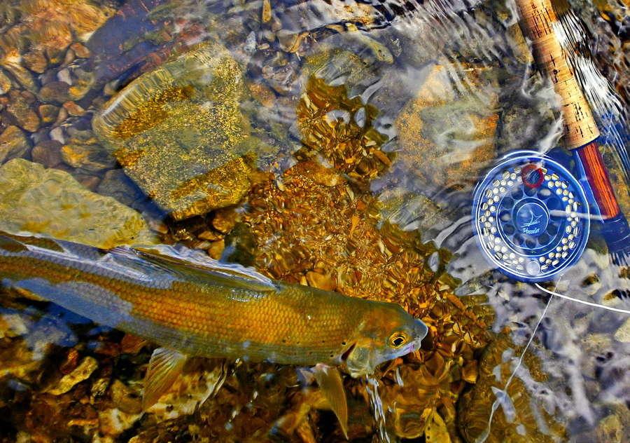 Fotografije ulova, ribe, oprema i dr. - Page 10 P7290010