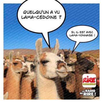 Nos amis, les animaux(quand ils font semblant d'être bête) - Page 8 Lama10