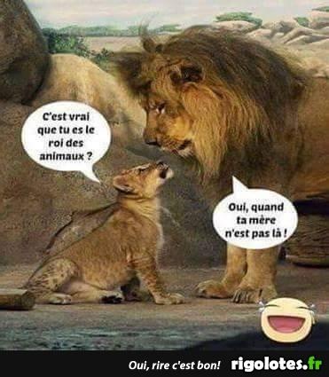 Nos amis, les animaux(quand ils font semblant d'être bête) - Page 7 Lion10