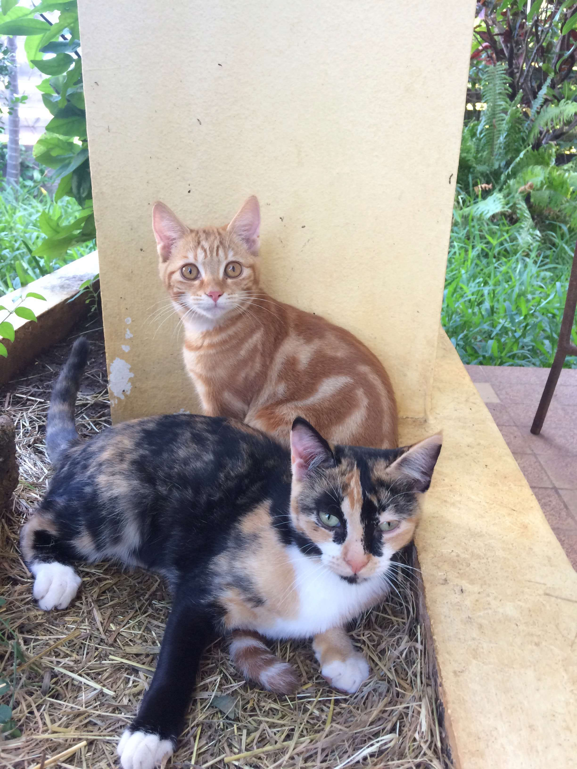 SOS pour deux chatons abandonnés A8950010