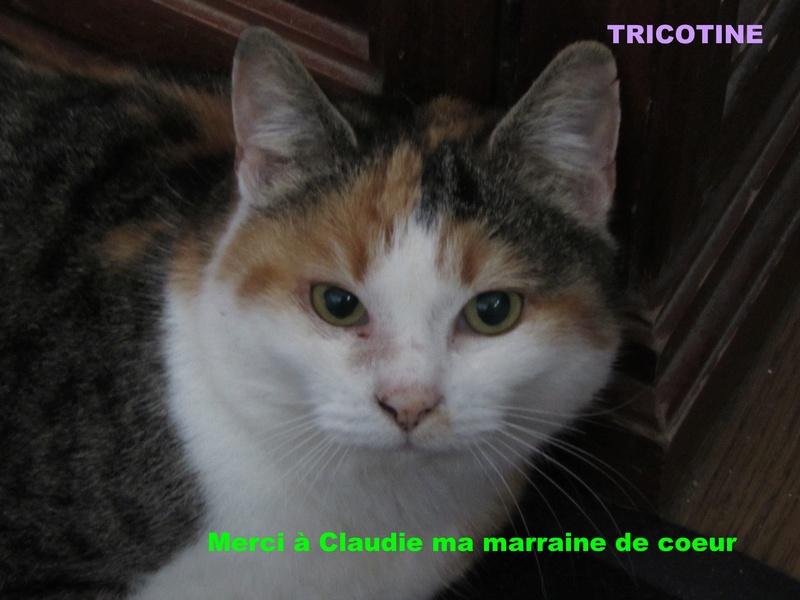 NOUVELLE DE TRICOTINE 02129