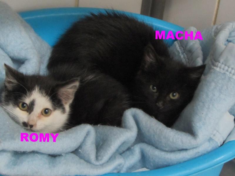 MACHA et ROMY 04111