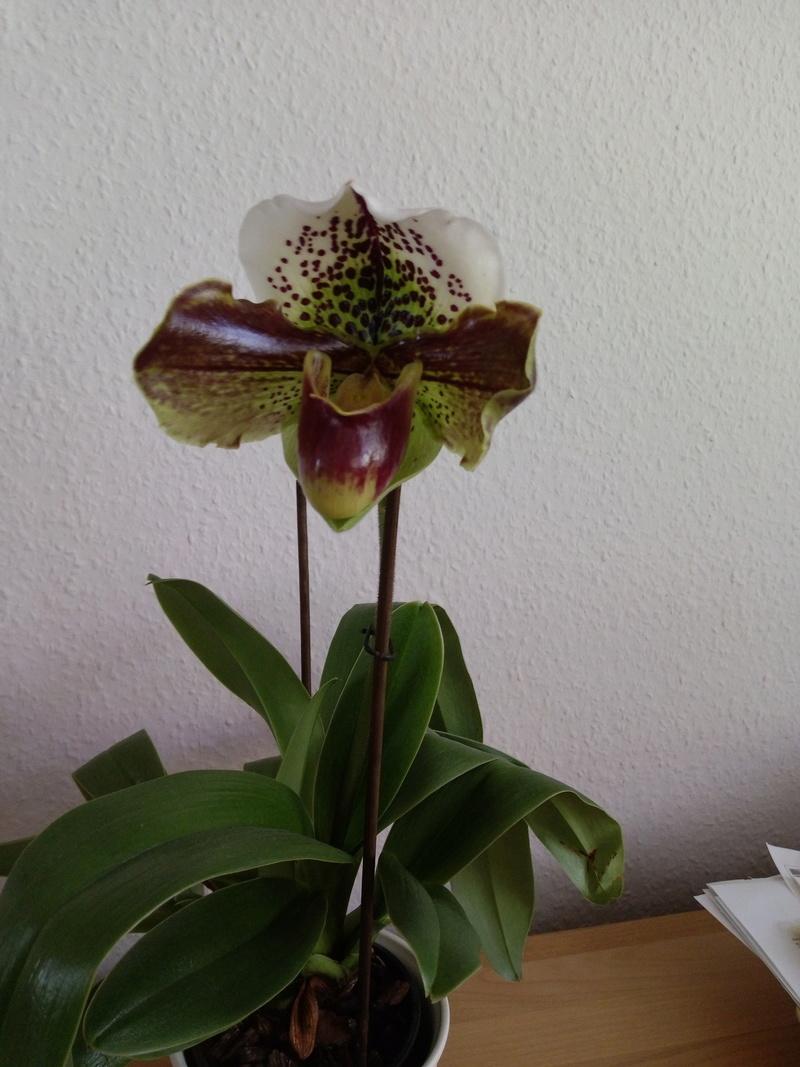Orchideen 3 (fortlaufende Seiten 300 bis 400) - Seite 2 Imag0010