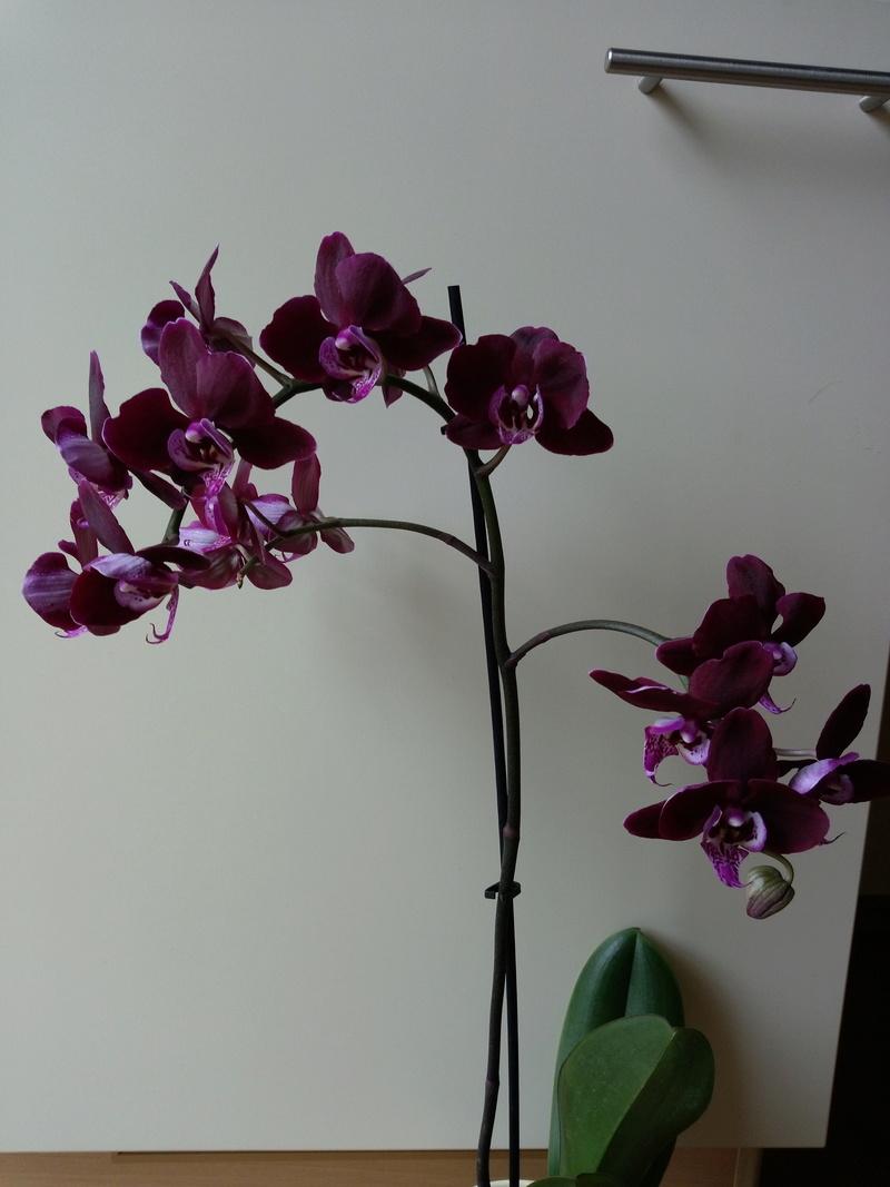 Orchideen 3 (fortlaufende Seiten 300 bis 400) - Seite 2 Imag1211