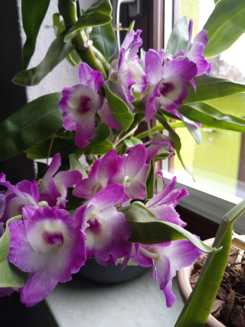 Orchideen 3 (fortlaufende Seiten 300 bis 400) - Seite 2 Imag1212