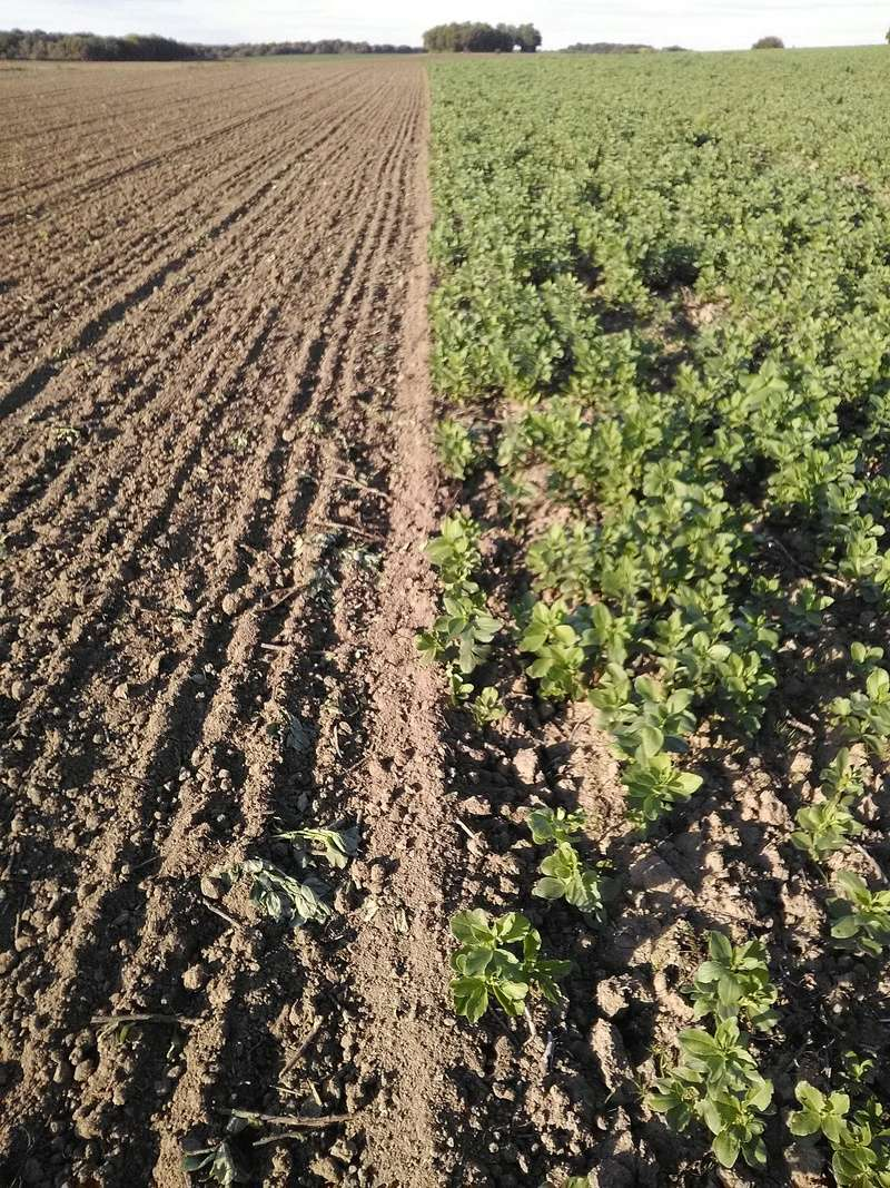 Semis de blé dans des repousses de féveroles - Page 3 Img_2016