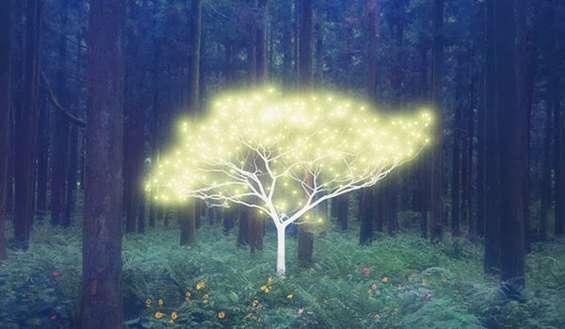 Comment utiliser l'énergie des arbres pour se soigner Arbres10