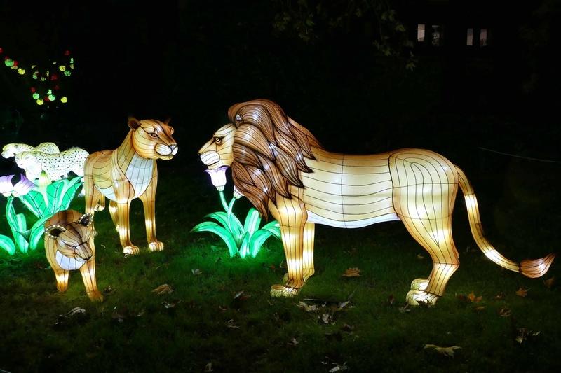 illuminations au jardin des plantes Illumi13