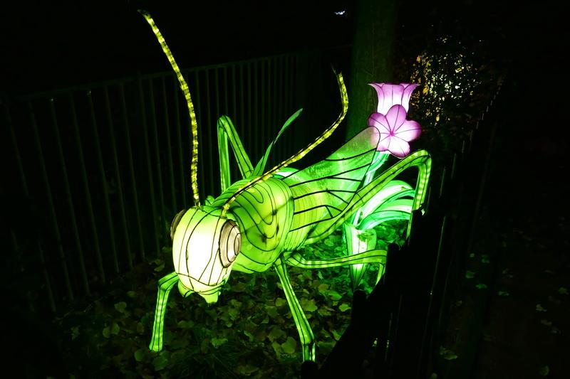 illuminations au jardin des plantes Illumi19