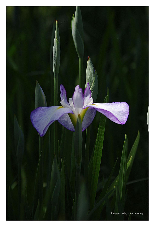 [Fil Ouvert] Fleurs - Page 21 Imgp6710