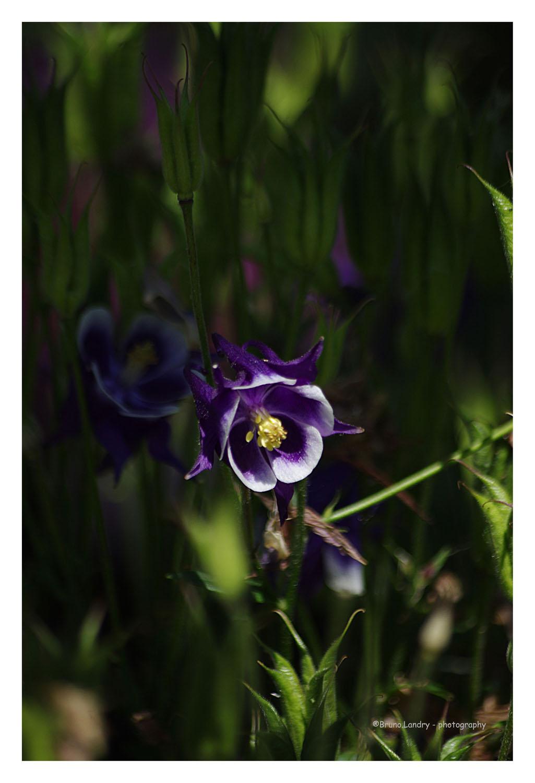 [Fil Ouvert] Fleurs - Page 21 Imgp6711