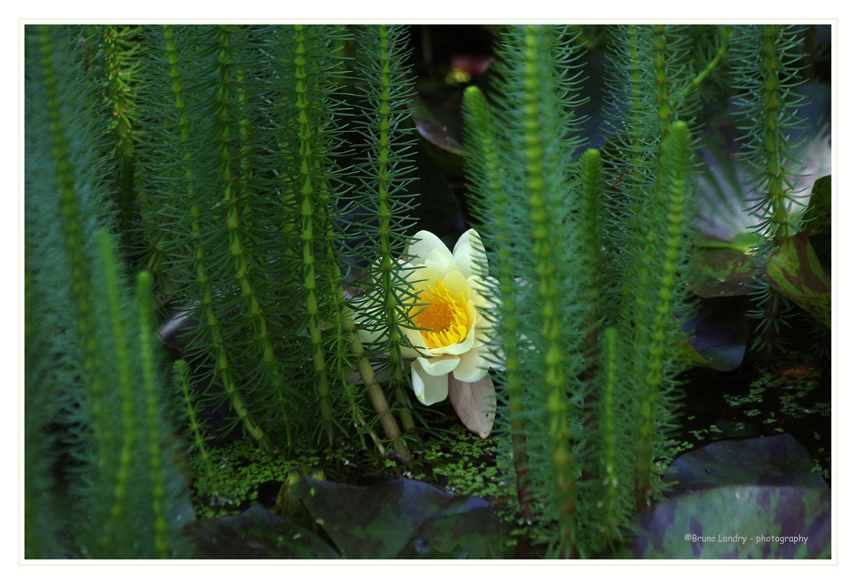[Fil Ouvert] Fleurs - Page 21 Imgp6712