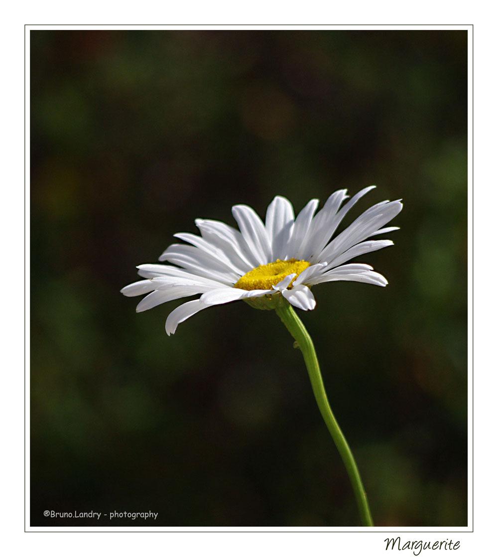 [Fil Ouvert] Fleurs - Page 22 Photo_12