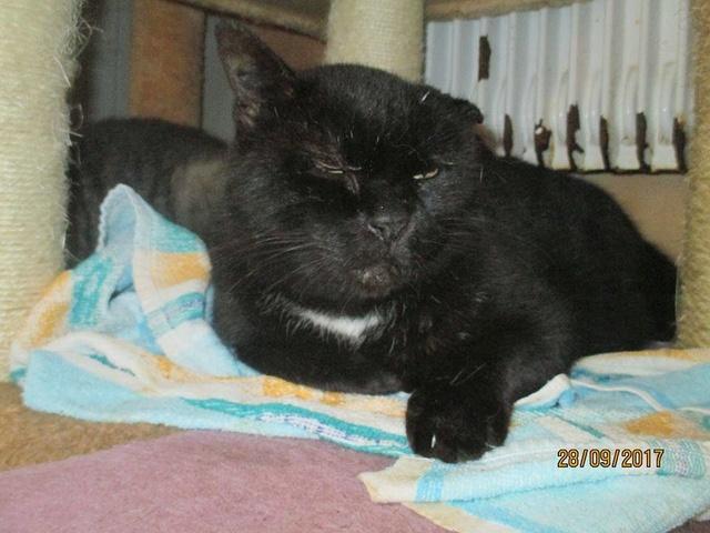 NABOU - FIV+ - Noir - Né le 01/01/2008 - En FA dans le 80 22140810