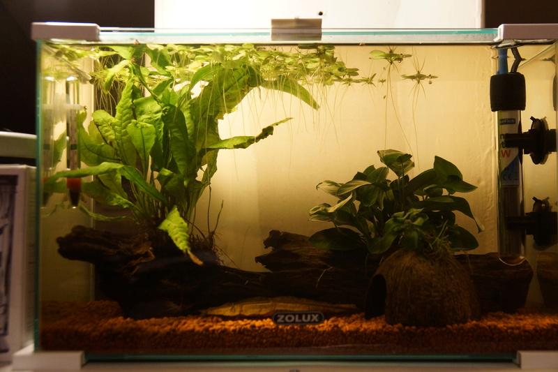 Aquarium 20L Dsc01610