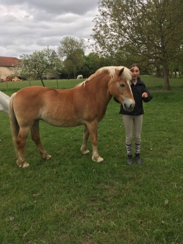ISA ESPERANCE - poney Haflinger née en 1996 - adoptée en juillet 2017 par sonia et Olivier 18042910
