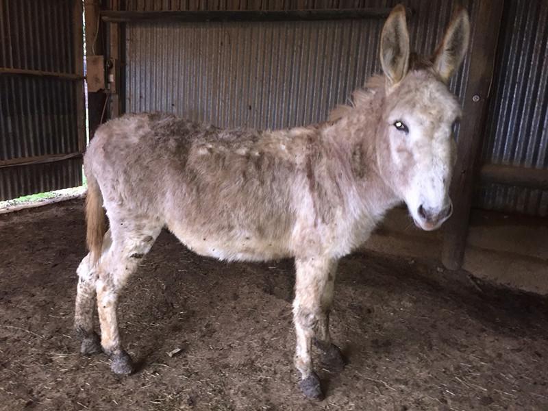 ZEBULON - ONC âne né en 2008 - adopté en octobre 2010 par Anita - Page 5 Img_0225