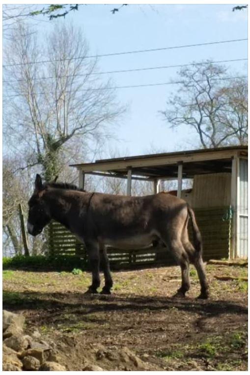 OSCAR - âne né en 2003 & SAMARA - TF née en 2006 (DCD janvier 2019) - adoptés en mars 2012 par Maxime Oscar710