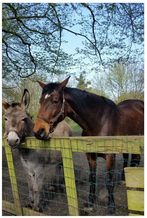 SAMARA - TF née en 2006 (DCD janvier 2019)  et OSCAR - âne né en 2003 - adoptés en mars 2012 par Maxime Samara13