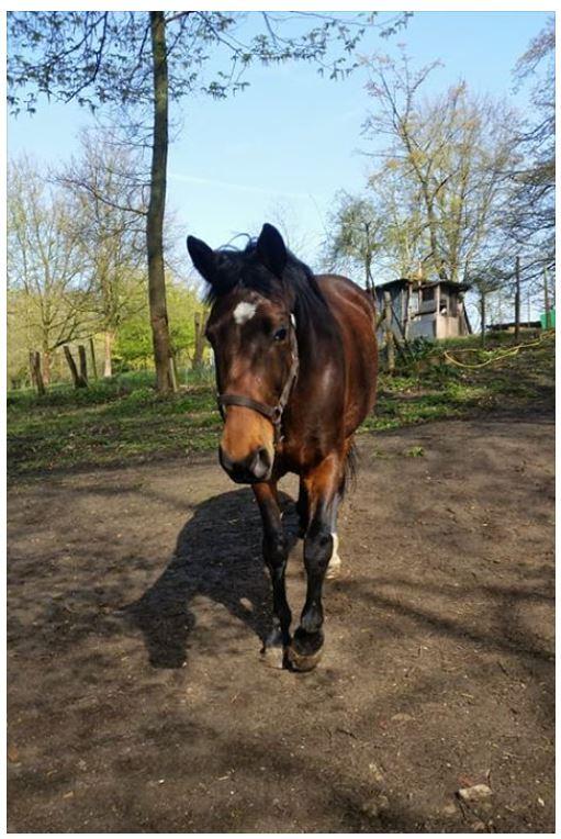 SAMARA - TF née en 2006 (DCD janvier 2019)  et OSCAR - âne né en 2003 - adoptés en mars 2012 par Maxime Samara15