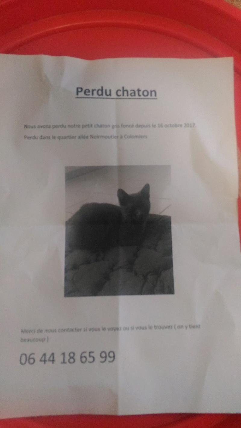 Perdu chaton Allée de Noirmoutier à Colomiers P_201718