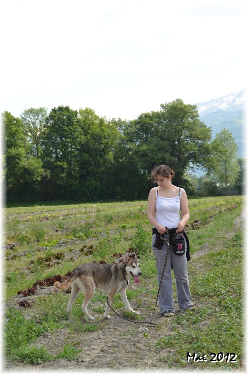 Link Berger X Husky mâle 5 ans gris et blanc PAR:38 ADOPTE - Page 2 12_05_10