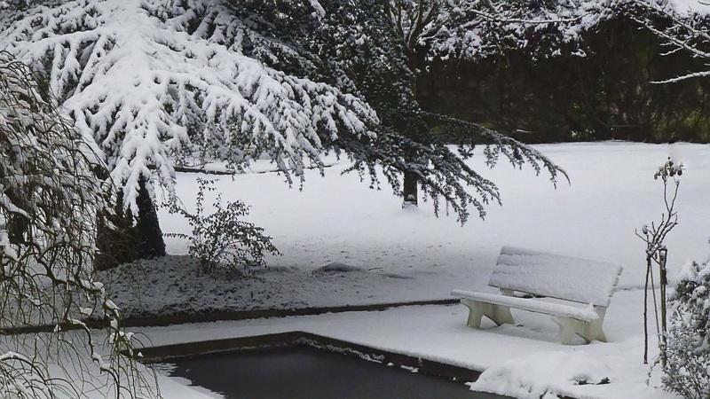 """Concours photo du mois de janvier 2018 - Thème """"Jardin d'hiver"""" (terminé) - Page 2 Photo_10"""