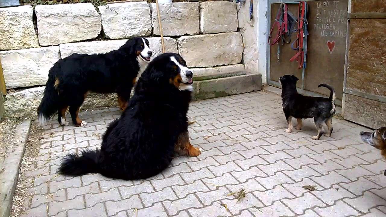PAMS (BRAHMS) -  x griffon 12 ans - Asso  Reve de Tina - adopté par Françoise (filleul de frimousse) Wp_20130