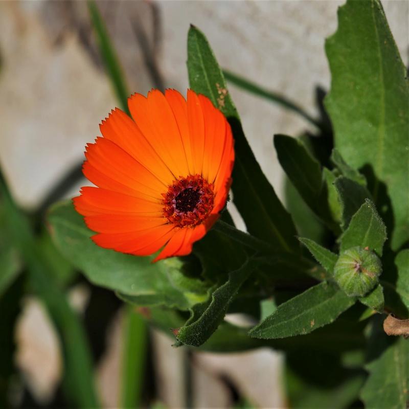 Orange du Maroc + recadrage P1000210