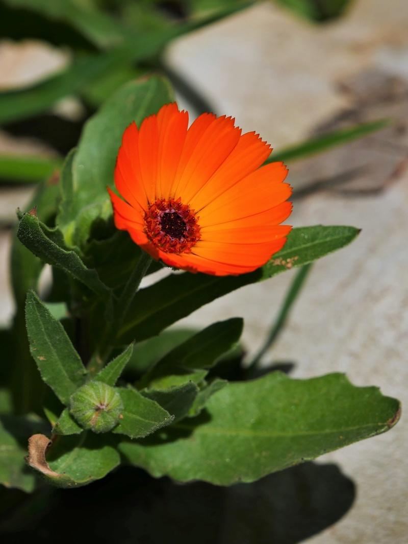 Orange du Maroc + recadrage P1000212