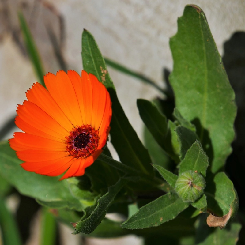 Orange du Maroc + recadrage P1000213